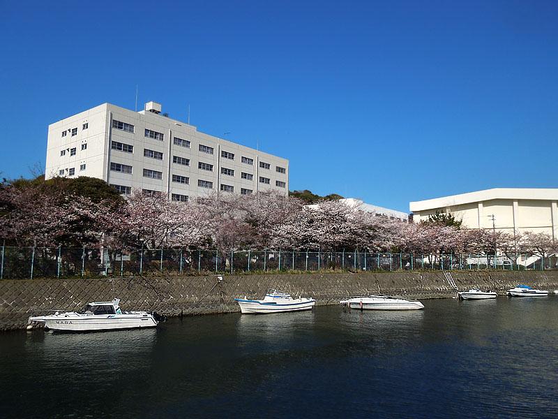 120418今年の桜3