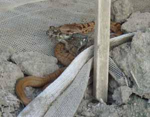 ヘビとカエル03