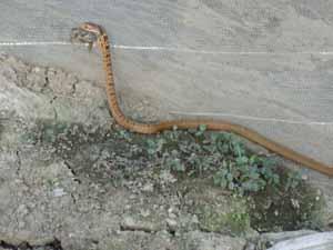 ヘビとカエル04