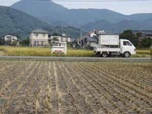稲刈り05
