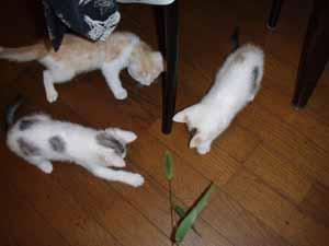 3子猫03