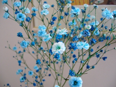 カスミ草とバラ4
