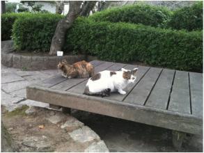 根来寺の猫231002_01