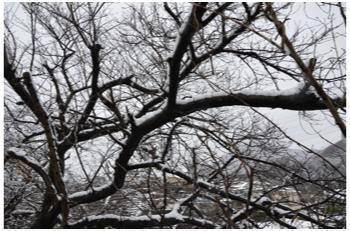 雪景色230211_04