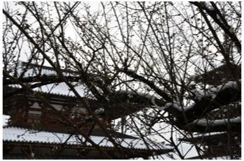 雪景色230211_15