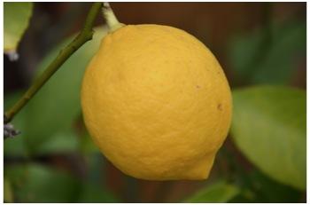 檸檬と梅2302_02