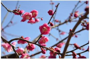 庭の花230226_01