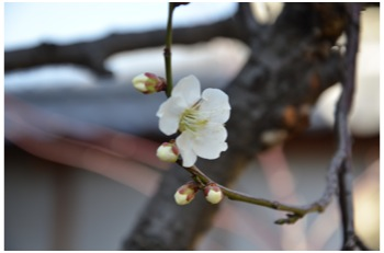 庭の花230226_02