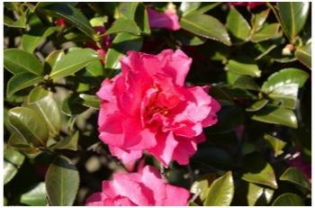庭の花230226_03
