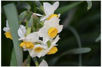 庭の花230226_04
