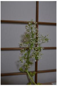 自宅植物230416_04