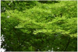 京都230505_09