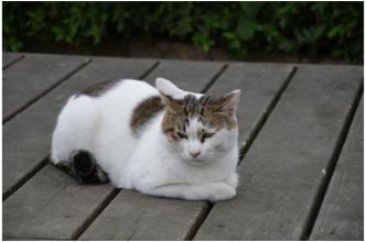 根来寺の猫231002_02