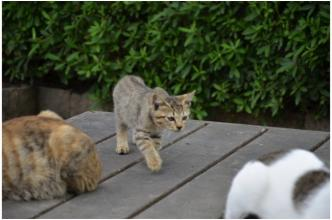根来寺の猫231002_03