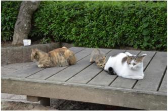 根来寺の猫231002_04