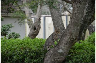 根来寺の猫231002_05