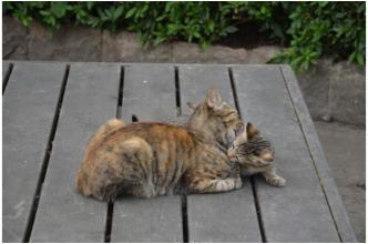 根来寺の猫231002_06