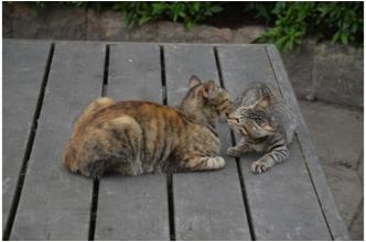 根来寺の猫231002_07