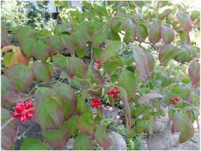 植物231016_02