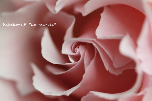 ラマリエ2011