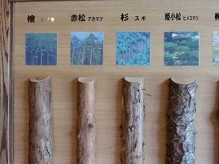 木の種類2