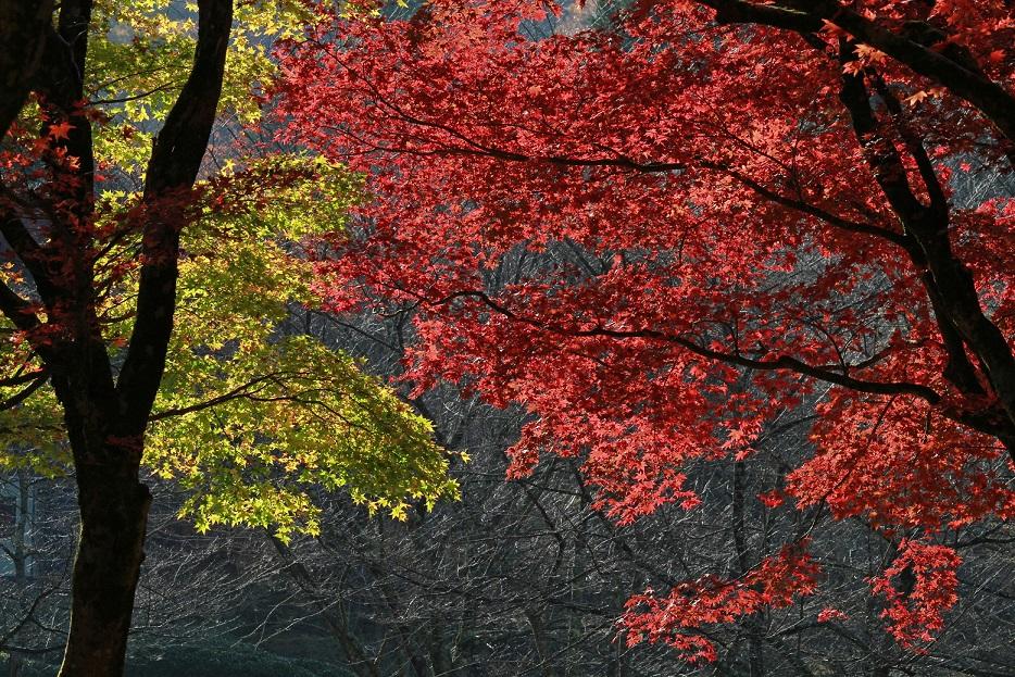 鶏足寺ブログ1