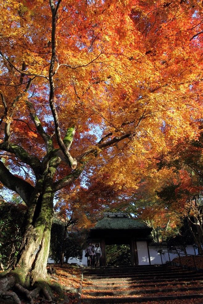 ブログ雨上がりの安楽寺1