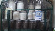 菌糸の群れ
