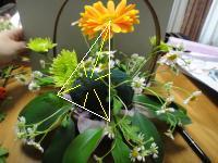 DSC00505_convert_20110501210158-2.jpg