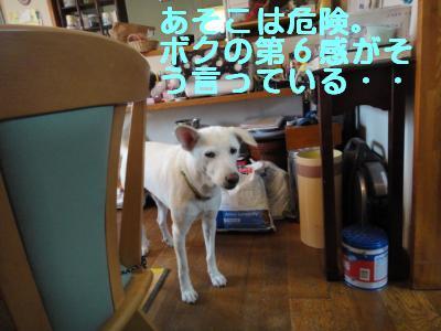 DSC00881_convert_20110621220750.jpg