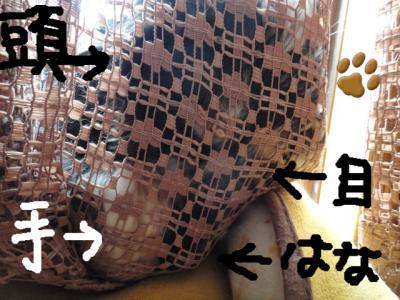 DSC01627_convert_20111203220607.jpg