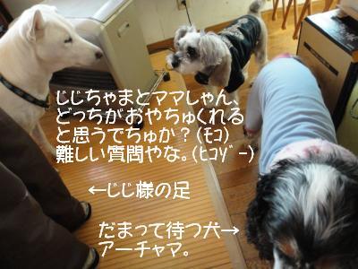 DSC01697_convert_20111215225730.jpg