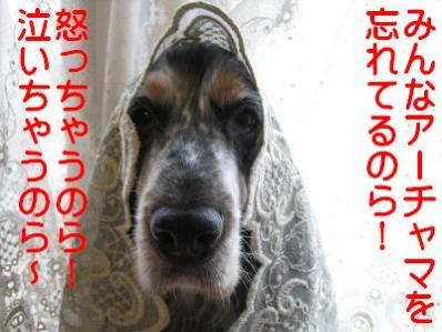 IMG_2721_convert_20101015233822.jpg