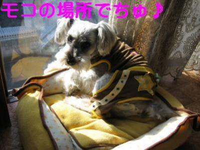 IMG_3584_convert_20101130224404_20101130231330.jpg