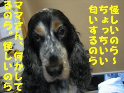 IMG_3783_convert_20101221231945.jpg