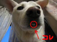 snap_hikowan_2010330333.jpg