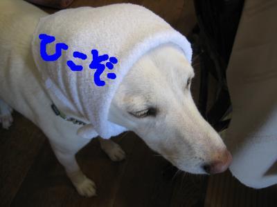 snap_hikowan_201062234954.jpg