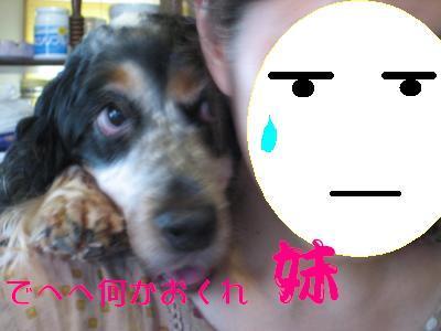 snap_hikowan_20109223404.jpg