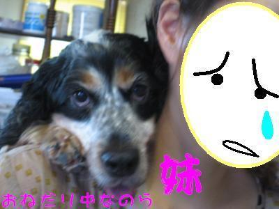 snap_hikowan_201092234113.jpg