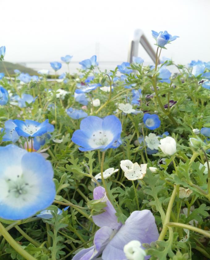 淡路のお花