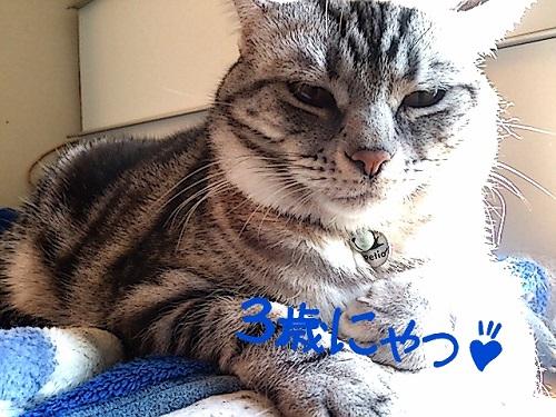 2014-01-23-10-48-29_deco.jpg