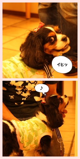 2011-0104-3.jpg