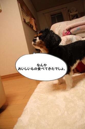 IMG_5190.jpg