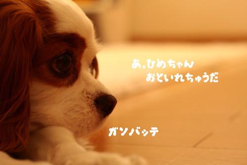 IMG_9950.jpg
