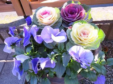 お花と大野ランチなど 004