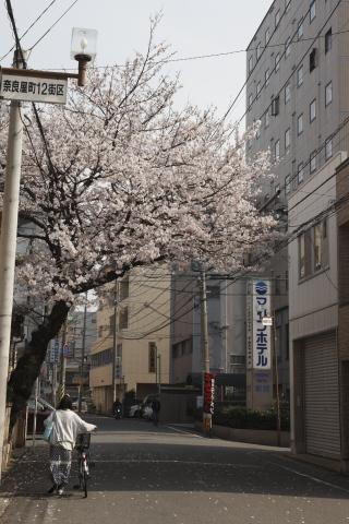 narayamachi12.jpg