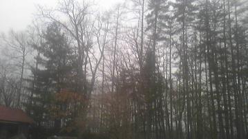 森から聞こえる
