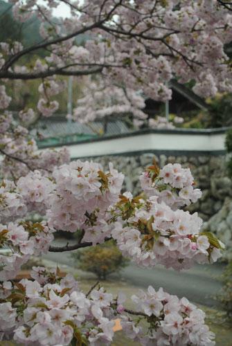 2012櫻32