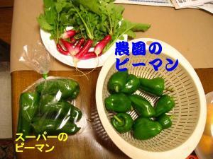 1027収穫-1