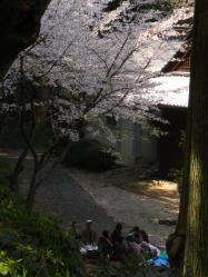 木陰の花見